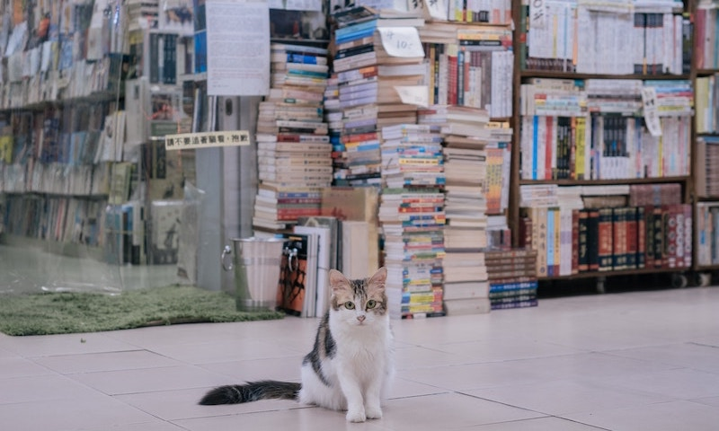 Canadian bookstore fosters local kittens