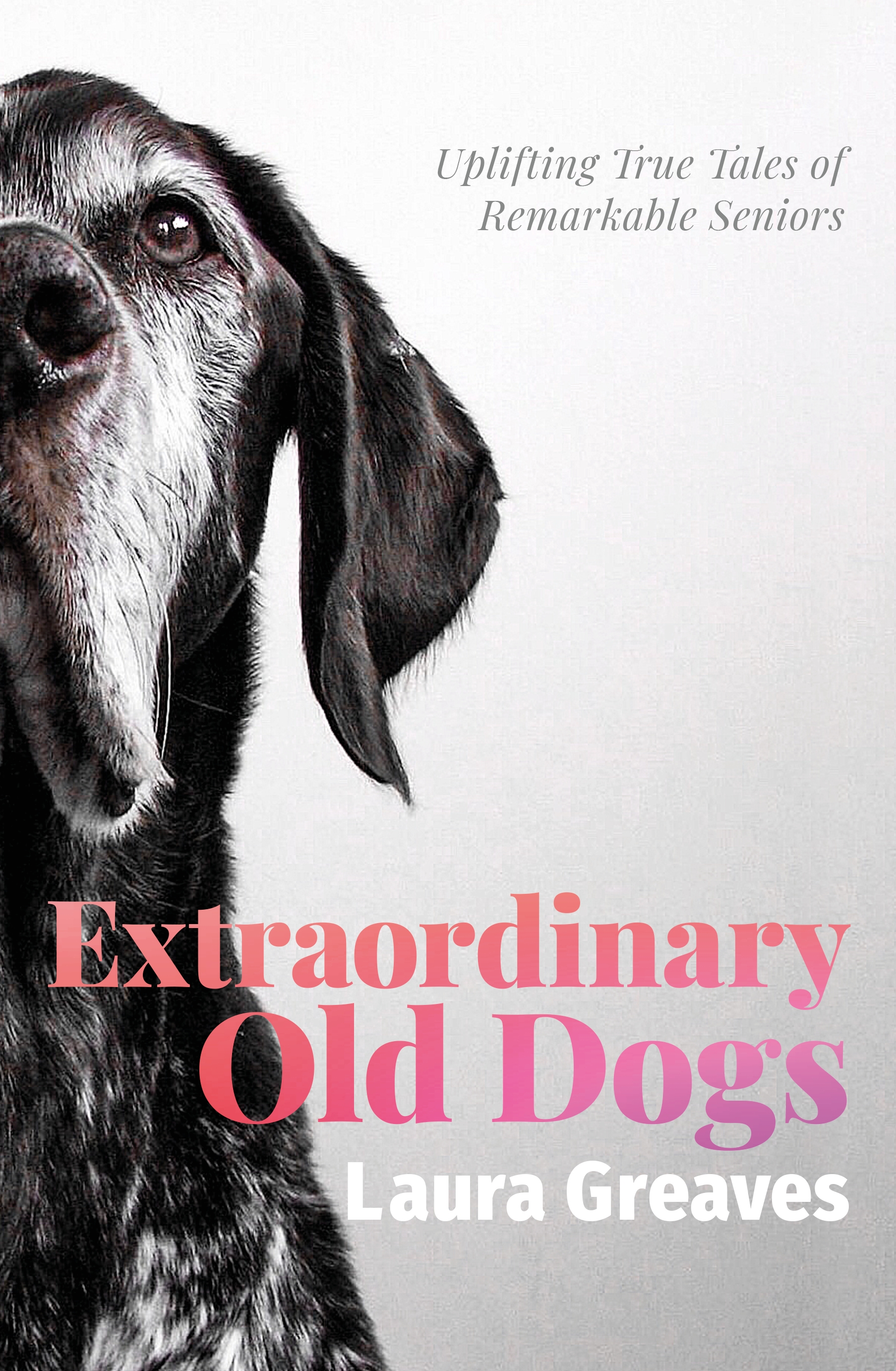 Q&A: Extraordinary Old Dogs by Laura Greaves