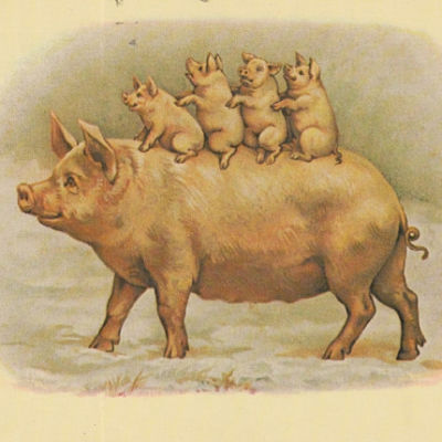 Quiz: Year of the Pig